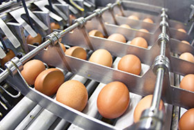 UMB Agriculture Banking Solutions for Processors (Egg processing)