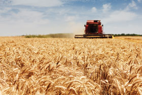 Agribusiness Producers Wheat
